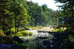 Early Morning on the Northville Placid Trail -New York (Andrew Rosser) Tags: newyork adirondack adirondacks features location mountains npt northvilleplacidtrail park statepark usa