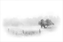 Nebel (angelika.kart) Tags: landschaft natur nebel herbst wiese schwarzweis brandenburg