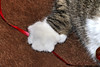 Lars (evie22) Tags: lars cat feline animals animal christmas cute paw ribbon