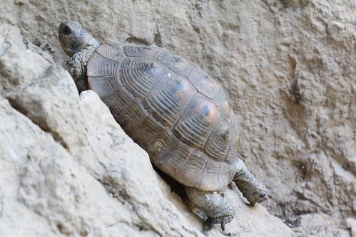 Turtle in Northern Turkey