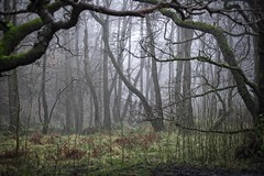 'The woods edge'.... (Taken-By-Me) Tags: takenbyme tree trees wood woodland woods branch ground green edge planted lancs outdoors fog creepy dark decay d750 nikon walk eerie empty forest