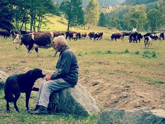 Les gardiens de vaches. (France-♥) Tags: 954 valsavarenche valléedaoste homme man dog chien vaches vache cows cow animaux guard gardien italie italy italia troupeau herd valleyofaosta people person degioz field champs
