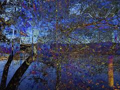 IMG_9402  Arlington Reservoir  ©2016 Paul Light (Paul Light) Tags: arlington arlingtonreservoir dxpapp massachusetts altered trees water