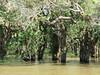 Tonlé Sap (Ali_Haikugirl) Tags: tonlésap cambodia travel