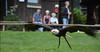 Weißkopf-Seeadler  / bald eagle (Bernd Tuchen) Tags: weiskopfseeadler bald eagle