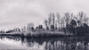 Drear (Mathiaswayne) Tags: bay flag pond maryland calvert county black white bw nikon trail water woods