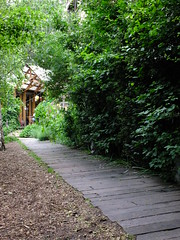 Along the Garden Path (failing_angel) Tags: 180616 london hackney dalston dalstoneasterncurvegarden dalstoneasterncurvegardenhasbeencreatedontheoldeasterncurverailwaylinewhichoncelinkeddalstonjunctionstation goods yardnorth line