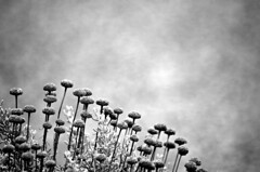 I fiori del mare (Riccardo Orti) Tags: biancoenero fiori luce
