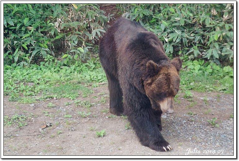 熊牧場 (25)