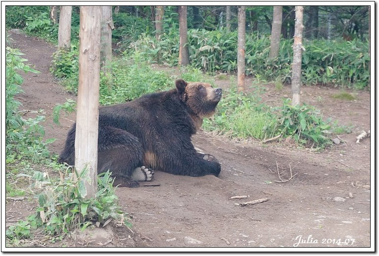 熊牧場 (19)