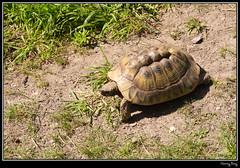 Parc Zoologique de Fort-Mardyck