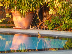 P1060070 (cpasbonljujubes) Tags: reunion de island soleil coucher du des route ciel et vu lumires saintleu ombres iledelareunion iledelarunion stleu tamarins