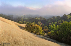 Buckeye Hill (James L. Snyder) Tags: california park trees red summer usa sunlight painterly green texture grass june horizontal fog clouds rural forest afternoon shadows veiled natural cloudy native country hill rich tan foggy atmosphere dry sunny bluesky diagonal hills edge cumulus ethereal bayarea symmetrical late openspace hillside obscured grassland preserve santacruzmountains thick atmospheric slope hollow balanced shrouded impressionistic textured steep brume buckeye airy dense sidelighting 2014 russianridge statuesque sanmateocounty deadgrass sanfranciscopeninsula aesculuscalifornica californiabuckeye sanandreasriftzone californiahorsechestnut treesonhills butanoridge