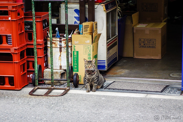 Today's Cat@2015-08-06