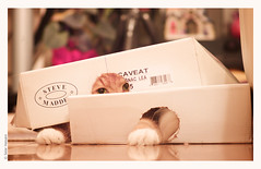 Amadeus the Turtle Cat (salar hassani) Tags: leica orange cat box turtle maine coon m8 amadeus 90mm elmarc