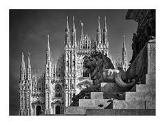 El guardià / The guardian (ximo rosell) Tags: ximorosell bn blackandwhite blancoynegro nikon d750 detall milan arquitectura architecture duomo catedral león monumento milán
