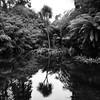 Heligan (melcolliephoto) Tags: landscape garden heligan palm tree white black mono cornwall