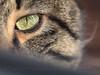 Cateye (Arunte) Tags: arunte marcofrancini gatto occhio cat eye cateye green