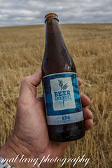 What better way to celebrate the end of harvest ,Than with a Eyre Peninsula Ale  Brewed in Port Lincoln from local barley (Malcom Lang) Tags: beer garden brewing eyre peninsula ale portlincoln barley harvest bottle alcohol alc bier biere stubbie frothy malt stubble clouds sky hand cheers birra labiere labirra malcomlangphotography canoneos6d canon canonef2470mm canon6d canonef southaustralia southern south southernaustralia southerneyrepeninsula australia australian aussie