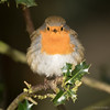 Robin (markwright12002) Tags: 2016 december eyeworthpond hampshire newforest robin