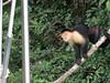 IMG_8988 (dstylebda) Tags: colonpanama gatunlake tamarins howlermonkeys sloth