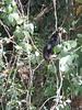 IMG_9024 (dstylebda) Tags: colonpanama gatunlake tamarins howlermonkeys sloth