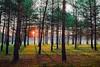 Sunrise (Sergio '75) Tags: tree sunrise alba winter inverno nature natura natur naturaleza naturallight natural canon canoneos70d canonef2470mmf4lisusm colorful italy italia landscape landscapephotography naturephotography sergio sergio75 friuli ragogna