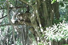 Little Cat... (CURZU@) Tags: puma cat mexico riveramaya