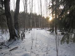 2017 Bike 180: Day 9, January 21 (olmofin) Tags: 2017bike180 finland snow bicycycle polkupyörä path trees lumi polku tracks metsä