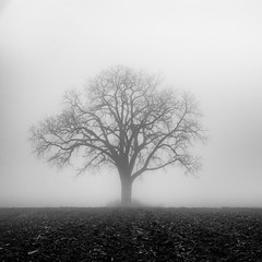 I will be here - if you look into your heart (Sean X. Liu) Tags: tree lonely fog foggy mist misty mysterious blackandwhite blackwhite monochrome nature