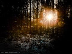 20170113099663 (koppomcolors) Tags: koppomcolors forest skog värmland varmland sweden sverige scandinavia vinter winter