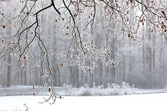 Winter / Hiver (tribsa2) Tags: nederlandvandaag marculescueugendreamsoflightportal winter hiver bos forest foret forêt arbre tree