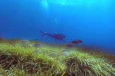 one way (Opera.Pink - d s g n) Tags: ocean blue sea fish nature mediterranean underwater dive scuba diving natura diver bigblue undersea biodiversity thebigblue photosub gopro bajoelmar