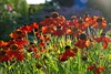 "Taking a DeLIGHT in the Summer Sunshine! (antonychammond) Tags: flowers summer sun sunlight garden coneflowers "" flowerarebeautiful saariysqualitypictures nature'splus longfloweringperennials"