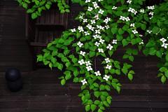 Rest under the tree (Adam Wang) Tags: plant tree japan tokyo dogwood marunouchi 丸の内