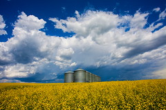 There's A Storm Coming (stevenbulman44) Tags: summer cloud white calgary field yellow canon wideangle bluesky filter alberta polarizer tornado canola lseries 1740f40l