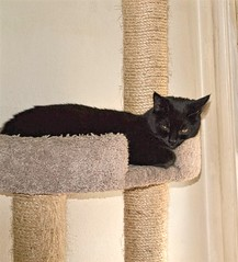 Sleepy Charlotte (zoomzoomz mom) Tags: bestofcats kittyschoice catmoments vg~catsgallery