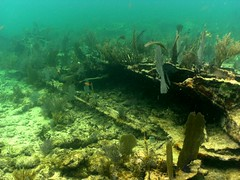 DIGITAL CAMERA (orangejoshuas) Tags: statepark scuba elbow trainwreck wreckdive johnpennekamp
