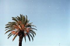 Kıbrıs/Cyprus (Basak U.) Tags: sky analog 35mm cyprus palm analogue palmiye olympusom1 girne kyrenia kıbrıs bellapais zuiko28mm28 tudorcolorxlx200 bellabayis