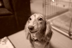すべての写真-91 (rudotam) Tags: dog 犬