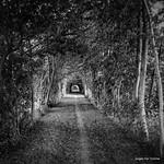 "mysterious boulevard #Steenhuize #herzele #vlaamseardennen #belgie <a style=""margin-left:10px; font-size:0.8em;"" href=""http://www.flickr.com/photos/117161355@N07/20150975685/"" target=""_blank"">@flickr</a>"
