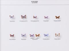 Lepidoptera Lycaenidae (nmbeinvertebrata) Tags: nmbe0174 lepidoptera lycaenidae celastrinaargiolus maculineaarion plebejusargus lycaeidesidas eumedoniaeumedon cyanirissemiargus plebiculadorylas polymmatusicarus lysandrabellargus lysandracoridon exhibition