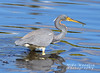 TriColor Heron (Mike Woodfin) Tags: mikewoodfin mikewoodfinphotography photo picture photography photograph photos photoshop pretty canon contrast color nikon nature bird birds heron tricolor tricoloredheron fowl waterbird water reflection blue awesome cool great neat beak yellow