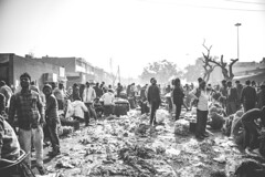 The chaos and the calm at the mandi (Crit93) Tags: sabzi mandi sabzimandi chandigarh sector26 india chaos