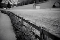f0.95 @ Val di Sesto (I) (Toni_V) Tags: l1000228 rangefinder messsucher leica leicam9 50mmf095asph nocti monochrome f095 schwarzweiss bw blackwhite sep2 silverefexpro2 niksoftware dof bokeh fence zaun hff sextnertal sexten sesto valdisesto sdtirol southtyrol altoadige italy italien italia europe perspective toniv 2015 150829 m9