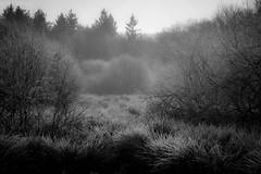 Misty morning (Wim Scholte) Tags: wimscholte nikon nature winter d750 netherlands fryslân