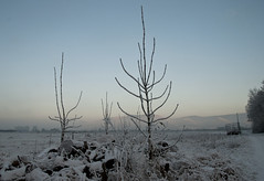Kahle, kalte Bäumchen (Maddes91) Tags: winterabend winter schnee eis dossenheim bergstrase schriesheim schwabenheim himmel abendhimmel kälte bäume natur feld wiese wald berge blau nebel dunst wolken