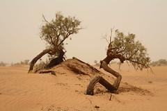 Morocco: Desert