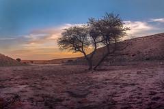Lonely tree at Salbukh dam ,Riyadh (sidd_photography) Tags: sky lake sunset mountains winter water blue sunlight clouds tree rocks beautiful colors magic seascape landscapes sundown dawn lonely long exposure seaside seashore dusk dam trekking saudi arabia riyadh salbukh nikonflickraward