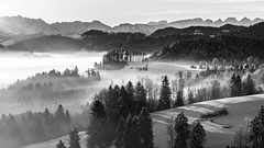 foggy winter morning (schneider-lein) Tags: mono monotone monochrome grau grey blackwhite schwarz weiss mountains berge bergkette landscape landschaft nature natur winter winterlandscape foggy frosty foggywintermorning hazy smokey earlymorning fog nebel churfirsten schweiz switzerland suisse svizzera fe9028macrogoss sonyilce7rm2 alpha7rm2 a7rii misty forest tree baum wald snow schnee winterwonderland